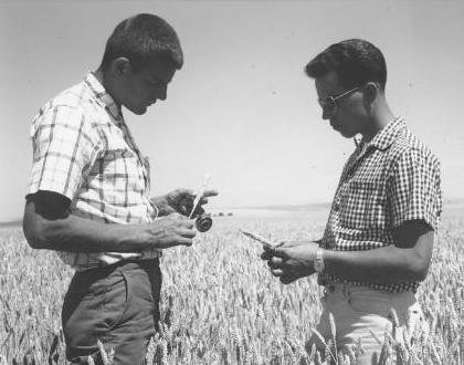 A Seed Certification inspector talking with a grower in a grain field.