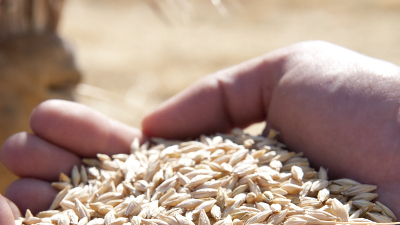 Oregon Seed Certification Service | | Oregon State University